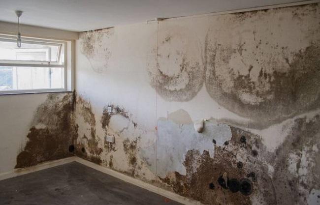 Hướng dẫn cách phòng tránh và xử lý vết ố tường